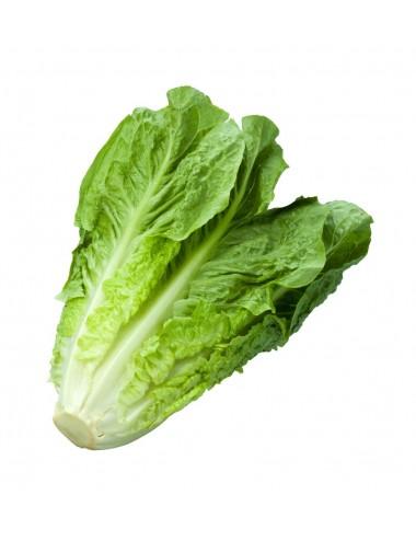 Cespo Lattuga a peso Vegetables Our Production Shop Online