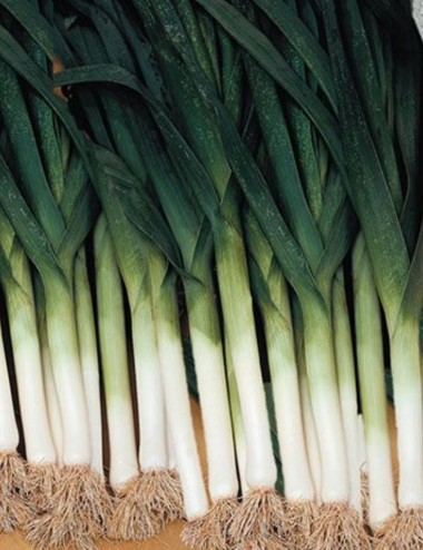 Porro Bio prov.Lazio a peso Vegetables from Italy Shop Online