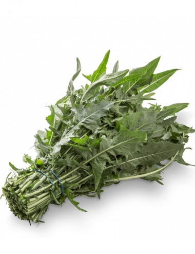 Cicoria a Mazzi a peso Vegetables Our Production Shop Online