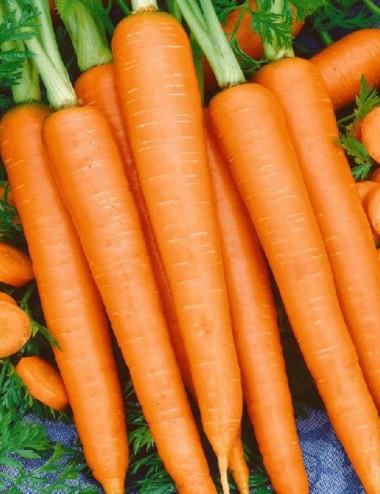Carote prov.Lazio a peso Vegetables from Italy Shop Online
