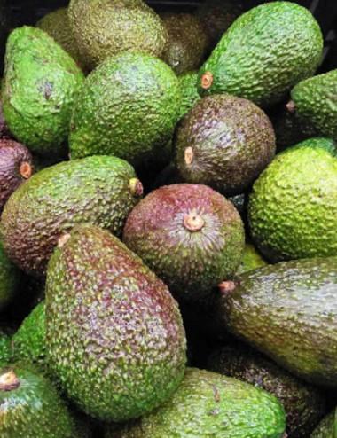 Avocado prov.Lazio Organic fruit Shop Online