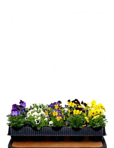 Mix 15 Piante Stagionali Ø Vaso 10 cm Outdoor flowering plants