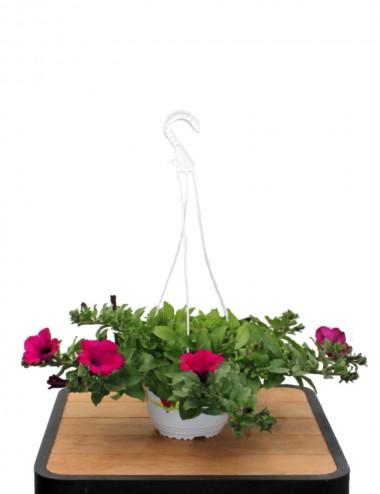 Surfinia Viola Ø Basket 19 cm Outdoor flowering plants Shop