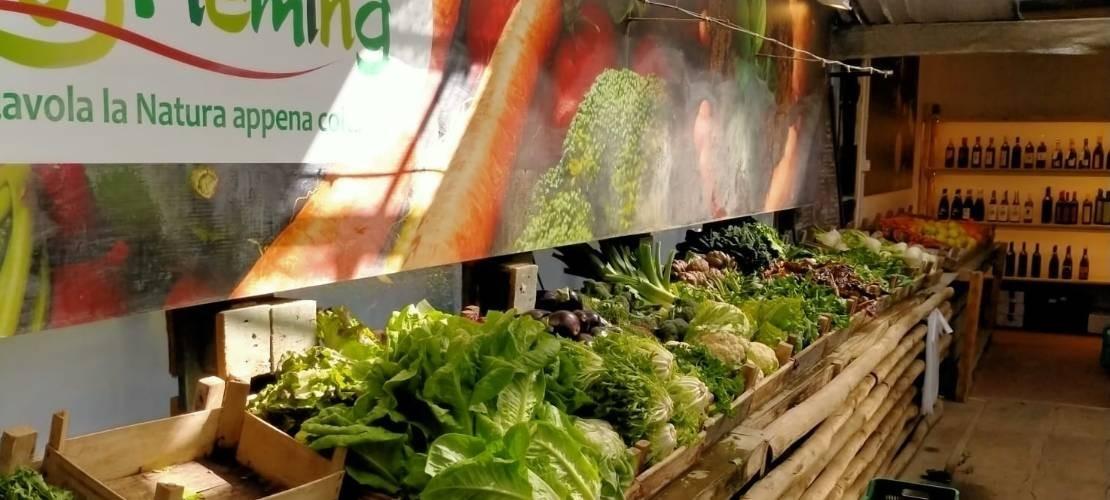 Vegetable Garden & Food
