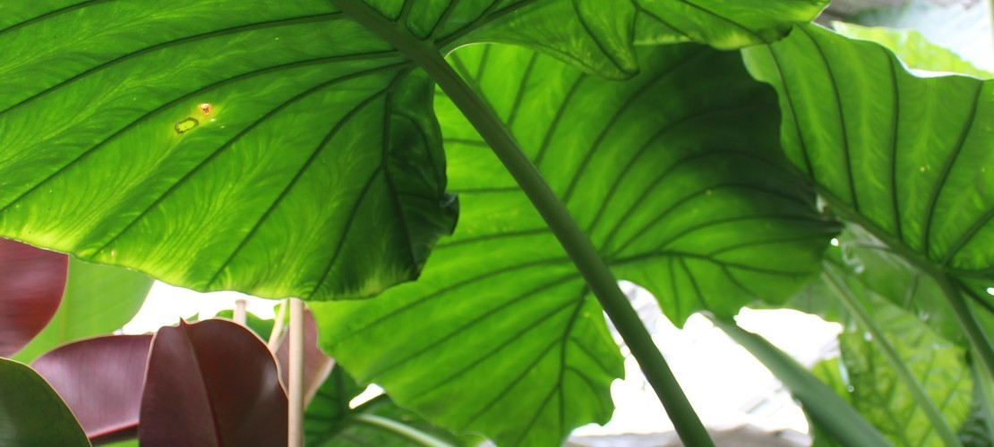 Unique Specimen Plants